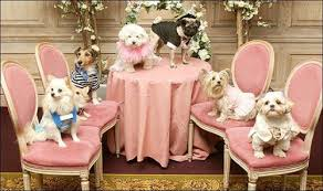 cani dei ricchi