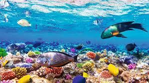 fondali marini di Sharm El Sheik