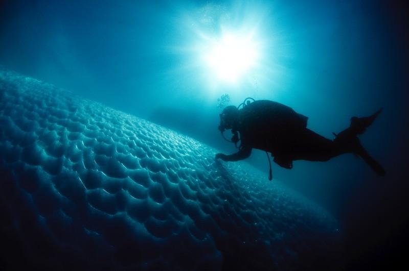 immersione tra gli iceberg